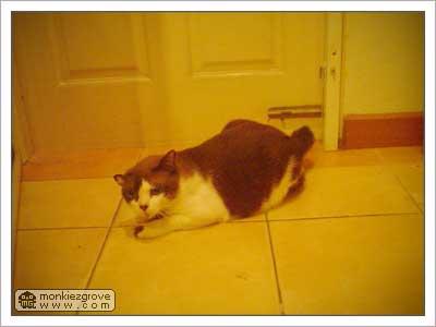 jub-the-cat-2