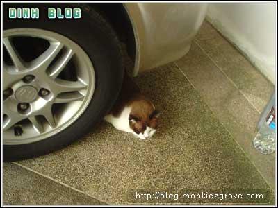 wheelcat1