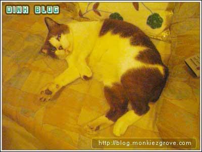 jub-cat-sofa-sleep