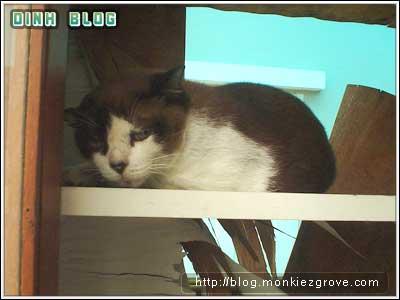 cat-sleep-inside-cupboard-4