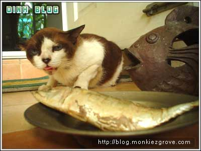 cat-n-fish-2