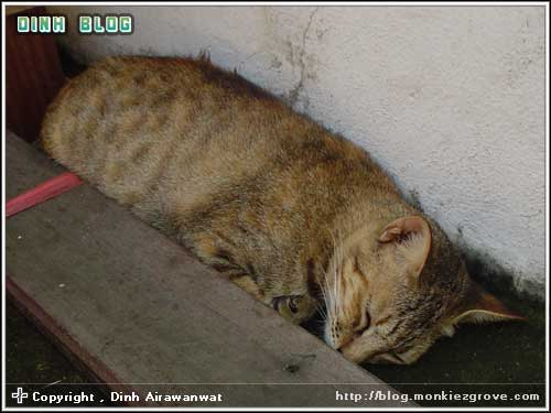 cat-in-mood-1-orange-brown
