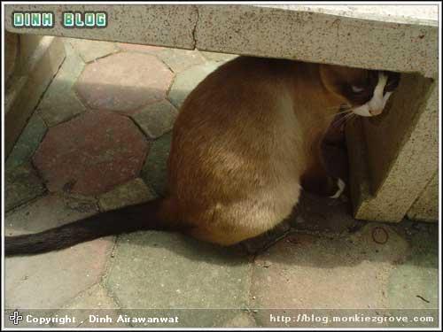 cat-in-mood-2-brown