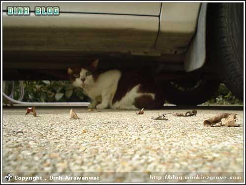 cat-in-mood-4-jub
