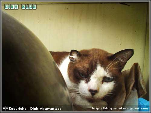 drowsy-cat-jubjub