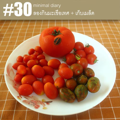 diary-0030-ลองกินมะเขือเทศ
